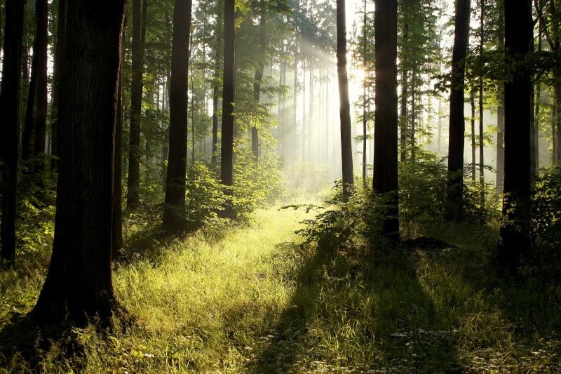 floresta - Vida Rural