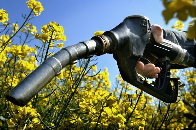 1biocombustible-diarieocologia.jpg