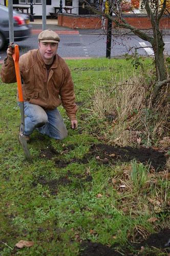 daffodil planting Dec 11 3