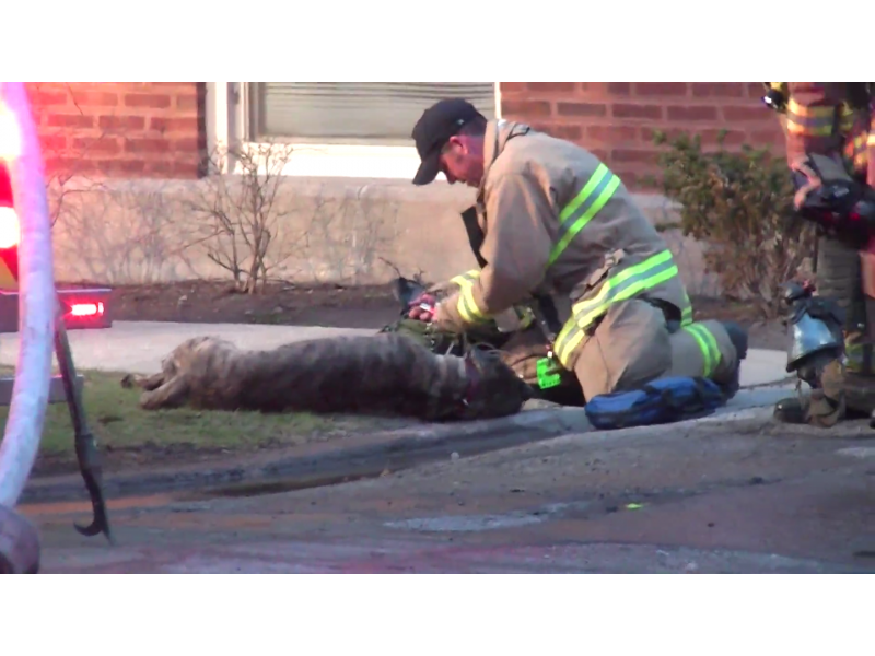 'He's Still Alive.' Firefighters Rescue Dog from Oak Park House Fire