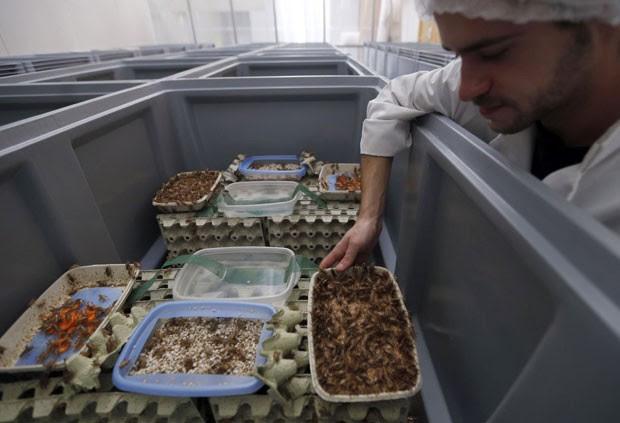Funcionário da Micronutris, na França, observa criadouro de insetos voltados para o consumo humano (Foto: Regis Duvignau/Reuters)