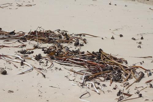 IMG 8981 On the beach