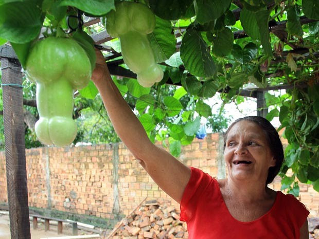 Maria Rodrigues de Aguiar Farias mostra seu maracujazeiro (Foto: Honório Moreira/OIMP/D.A Press. )