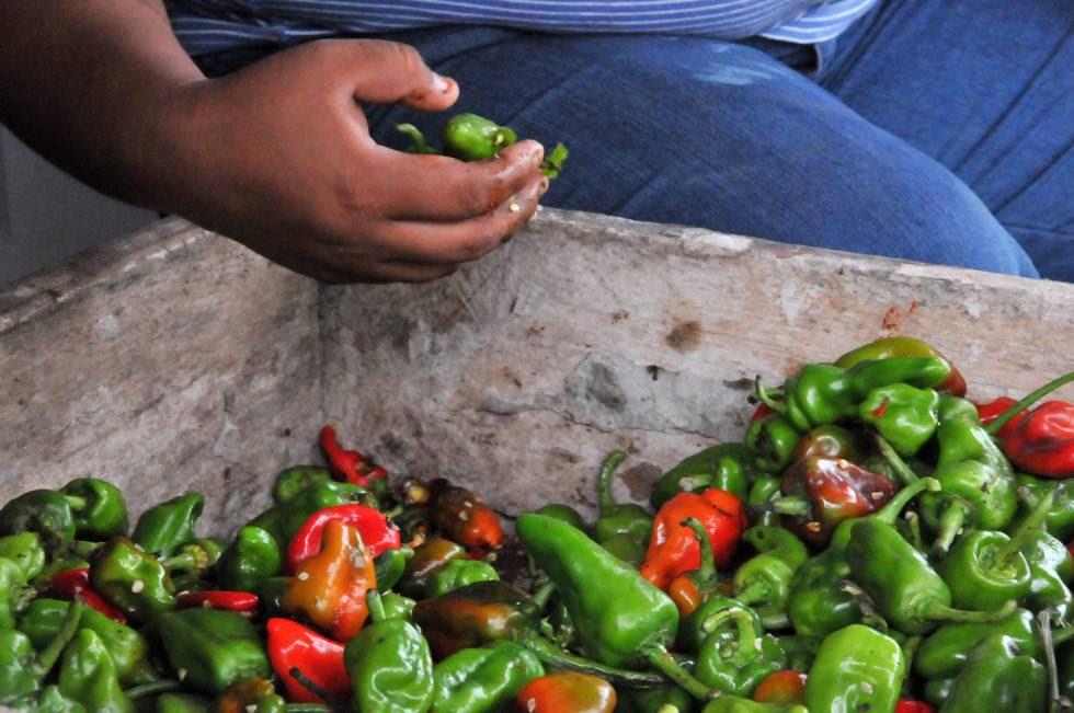 Un proyecto de la FAO en NIcaragua trata de fortalecer a los pequeños productores como estrategia contra la pobreza extrema.