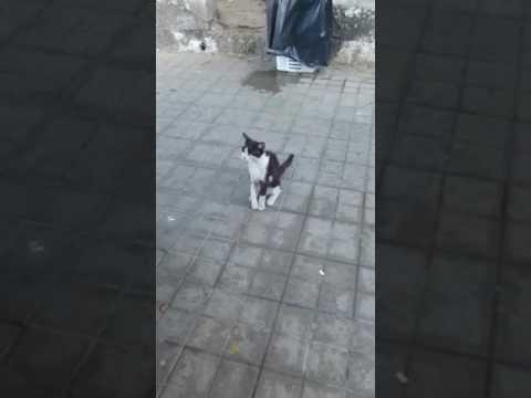 Gato herido busca acogida