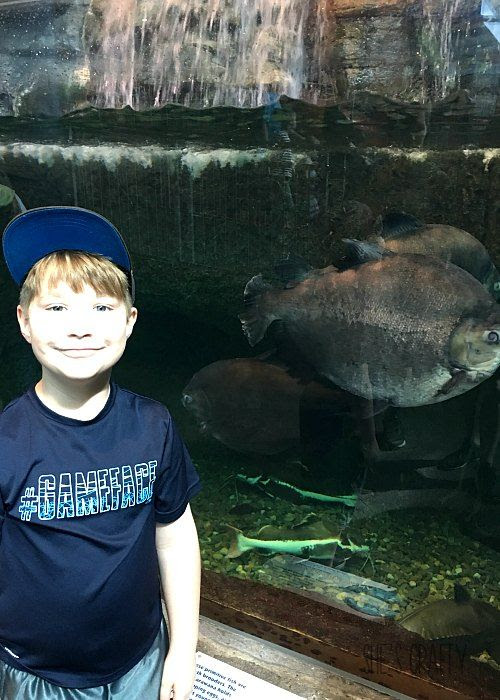 aquarium at the smokies, to do in Gatlinburg