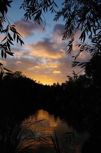 étang au soleil couchant -juin 2010