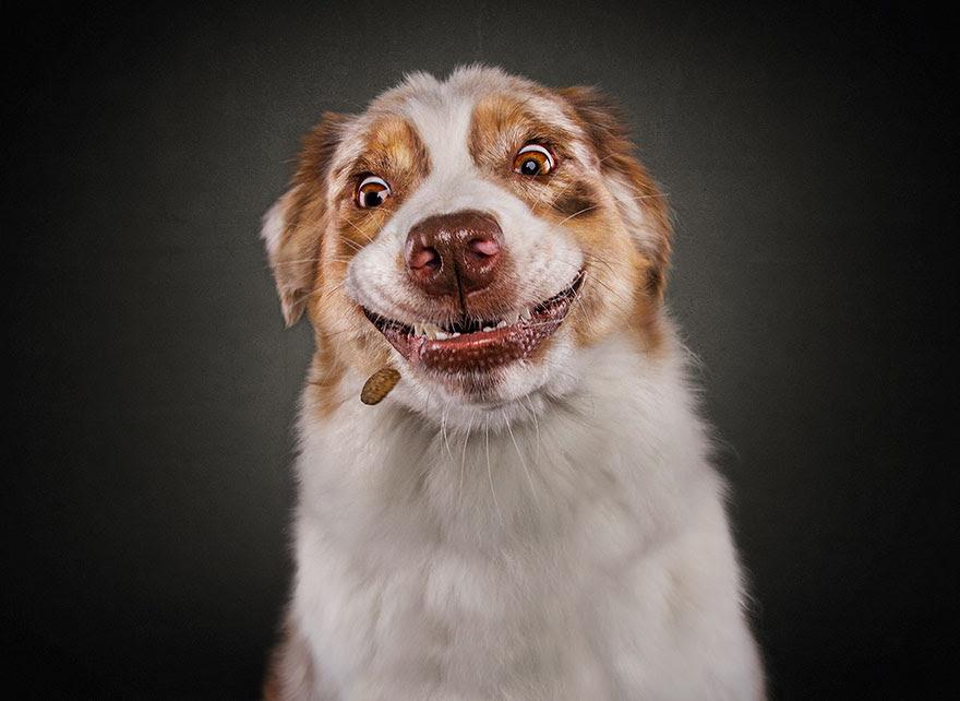 fotos-perros-expresiones-faciales-comida-christian-vieler-2 (15)