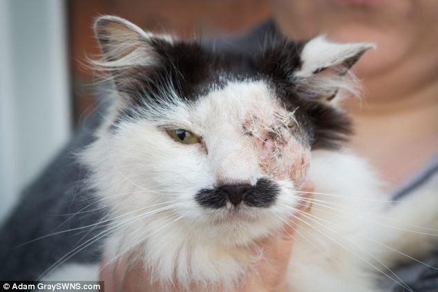 Figura: Baz, un gatto di sette anni, ha una patch distintivo di pelliccia nera sotto il naso, che ricorda i baffi del dittatore nazista