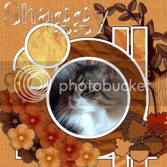 tabby cat,Autumn