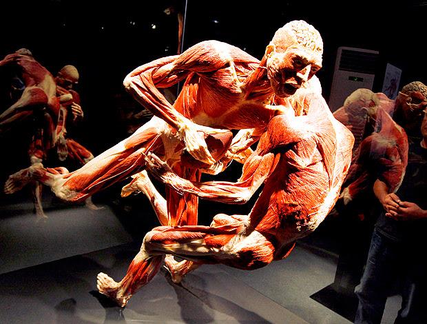 Exposição corpo humano basquete, ginástica e rúgbi