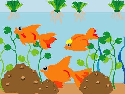 goldfish tank pictures. GOLDFISH TANK SET-UP