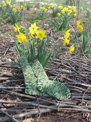 Enjoying the daffodils
