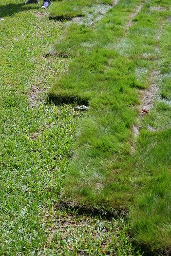 strange lawn