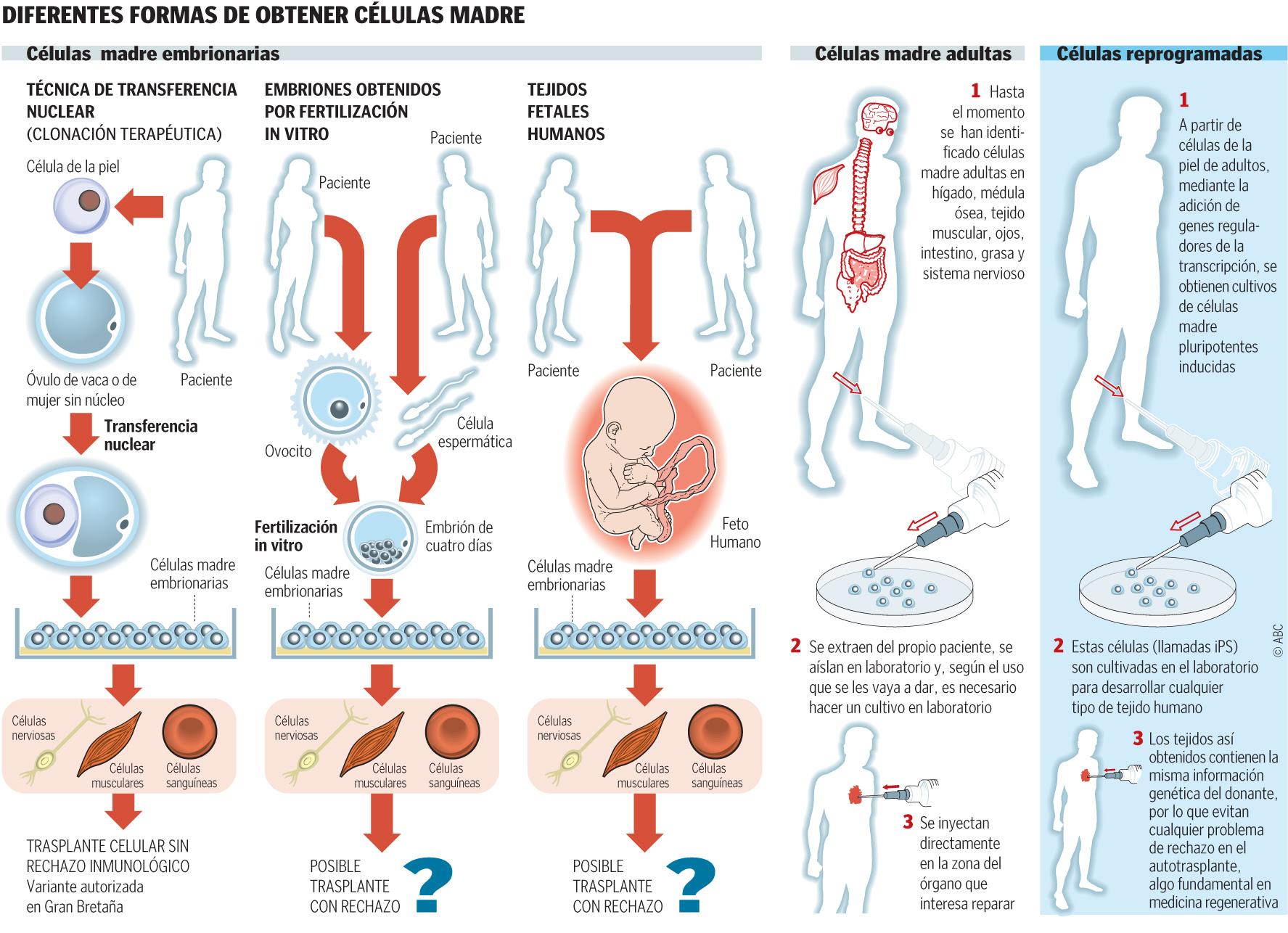 obtencion celulas madre