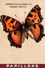 papill 14