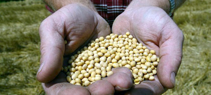 A farmer is seen holding Monsanto's Roundup Ready soybean seeds at his family farm. (photo: Dan Gill/AP)