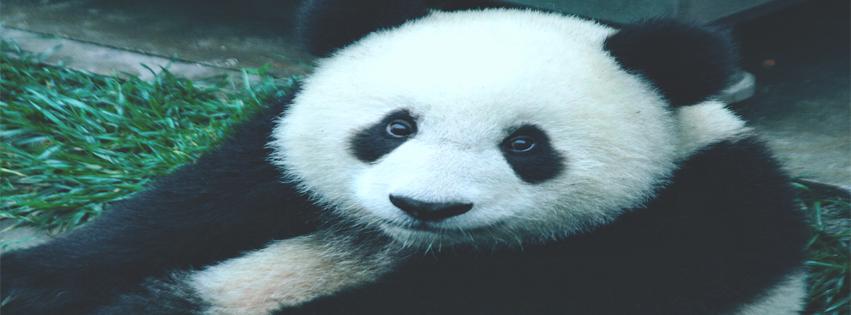 capa para facebook panda