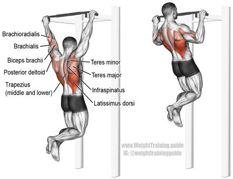 pull  exercise instructions   weight training