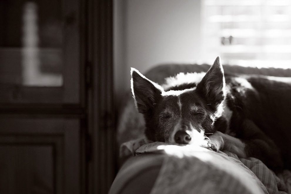 Победитель в категории «Пожилые собаки»