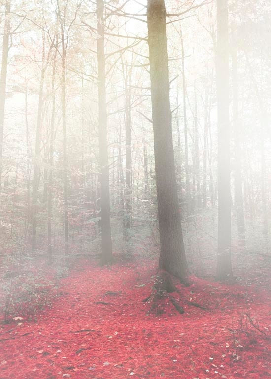Tree photography, fairy tale, fog and mist photo, red leaves, wall decor, mysterious, gray, white, 5x7 print under 25 - Raceytay