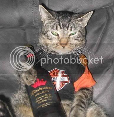 Foto de um gato com a roupa da Harley-Davidson e uma garrafa da Budweiser