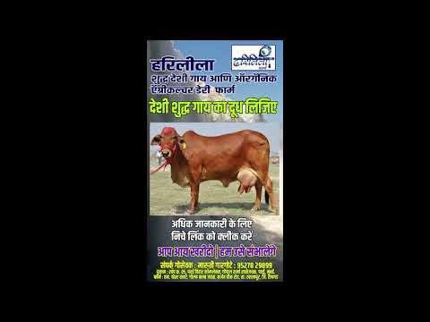 Mumbai Dairy | Dairy Milk Shop in Mumbai, Thane, Pawai, Andheri, Mulund ...