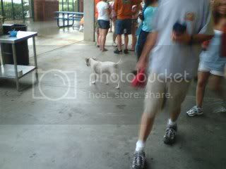 Wet dogs at the ball park