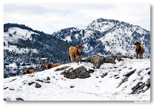 Nas montanhas de Alles... #2 by VRfoto