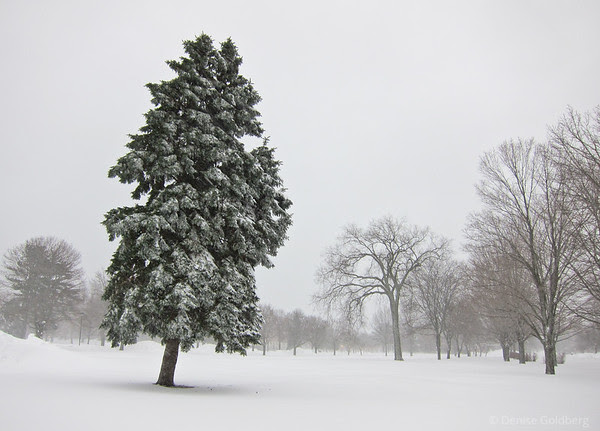 snow, leaning tree