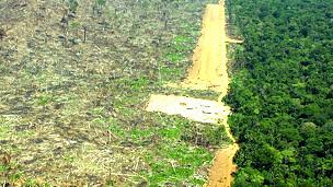 Destrucción del bosque amazónico