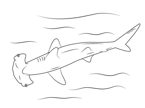 Dibujo De Tiburón Martillo Para Colorear Dibujos Para Colorear