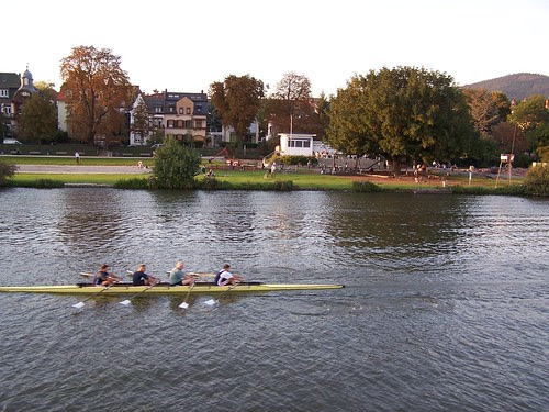 Rowers on the Neckar