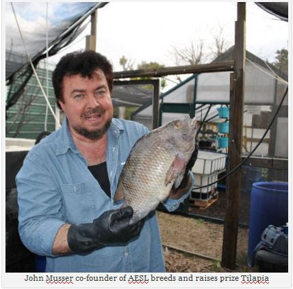 Become the ultimate Tilapia Breeder for food, fun, fertlizer, and