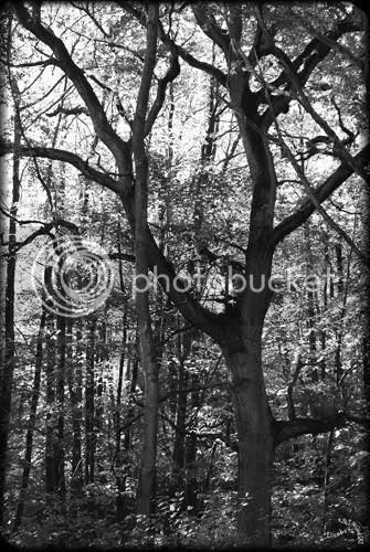arbre noir et blanc photo