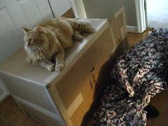 Jasper guards the box
