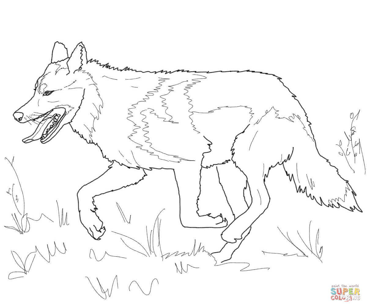 Realistic Wolf Drawing Tutorial at GetDrawings   Free download