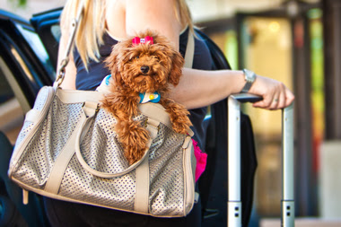 You Might Be Able to Bring Your (Small) Pets on the Metra Soon
