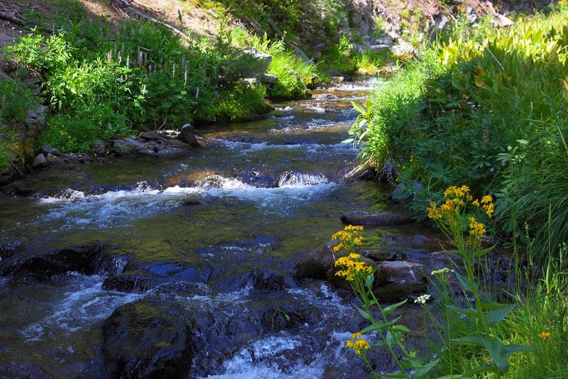 IMG_1112 Kings Creek Falls Trail