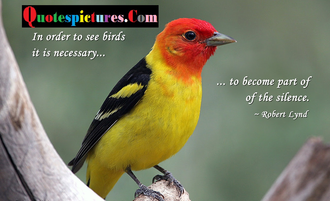 Birds Quotes Birds Becaome A Part Of Silence By Robert Lynd