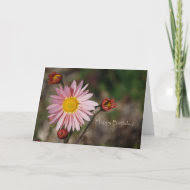 Fall Aster Birthday card