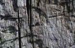 back004.jpg (427419 Byte) background stone