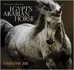 Horses 2011 Wall Calendar