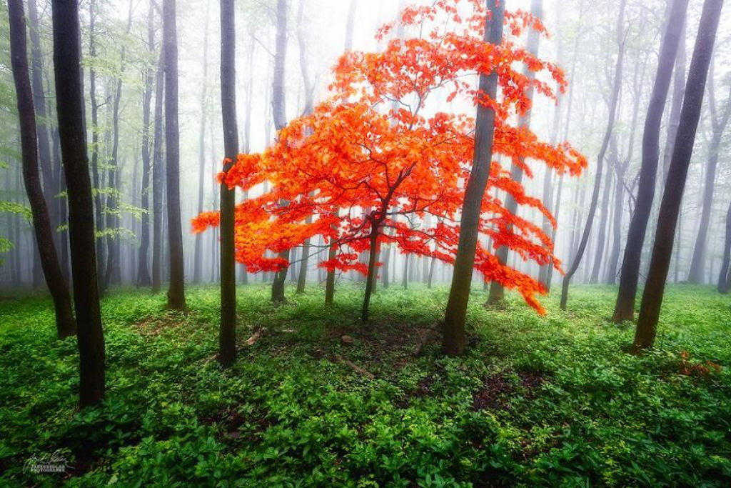 Os bosques outonais oníricos de um fotógrafo tcheco 11