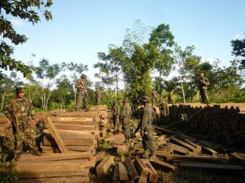 Maioria dos artigos de consumo vem da desflorestação ilegal