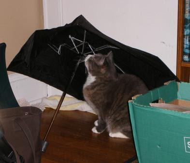 LB Sits Under My Broken Umbrella