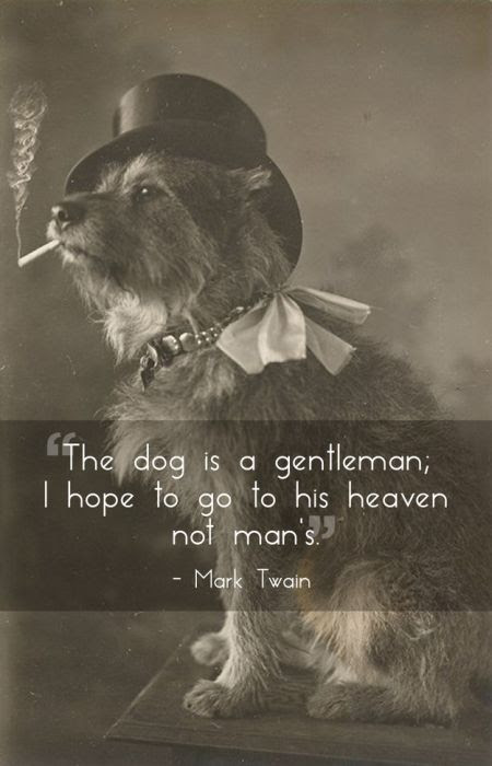 Fantastic Photos With Quotes About Pets