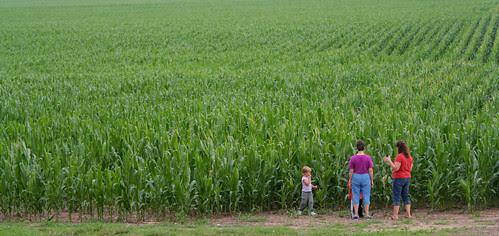 Conner Prairie Corn