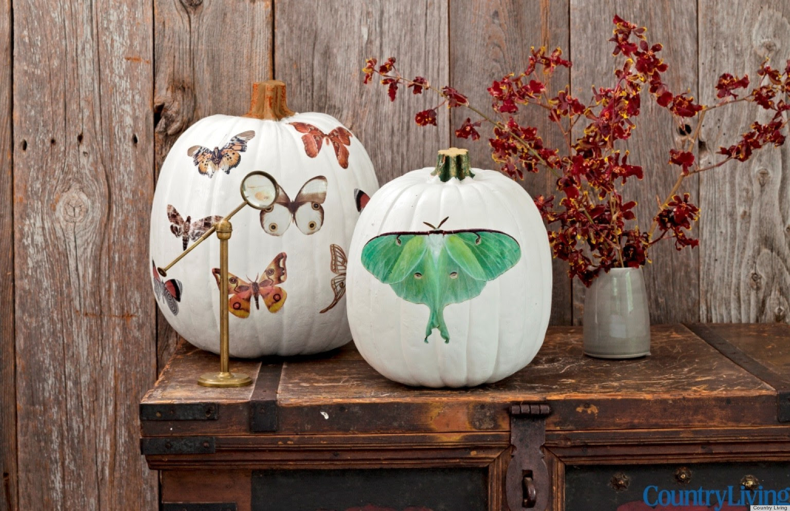Halloween Decorations: Moth Decal Pumpkins From Country ...
