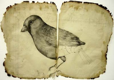 Eric Ailcane - retro bird drawing